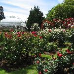 Rose garden at Christchurch botanical gardens