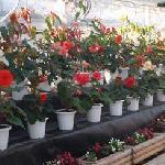 フラワーパークの温室のお花