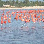 Flamingos at Ria LArgatos