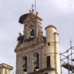 Storks nesting, Ecija