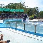 Mundo Marino: El show de la orca