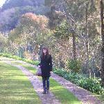 Entering Organic Garden