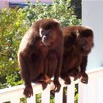 monkeys on our balcony