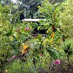 House Yaka seen through some of the lush foliage