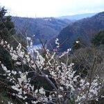 五月川渓谷を望んで