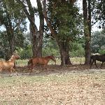 Los hermosos caballos