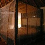 Great beds! Mosquito netting, but I never saw any mosquitos or any other annoying bugs