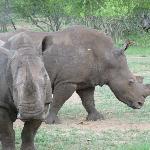 rhino at KM
