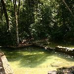 The lovely jungle pool