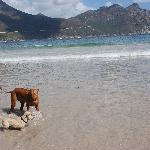 On the beach at Hout Bay