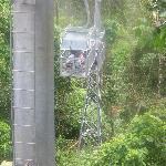 The Canopy Tram