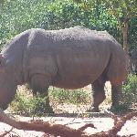 Rhino (plans are to reintroduce this animal to the reserve)