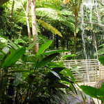 waterfall in rain forest center