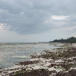 La plage des autres hotels de Diani à marée basse