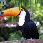 Tucan at Bird sanctuary