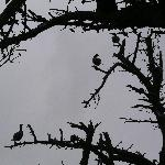 Waterfowl along Lake Cleone
