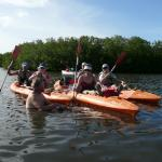 During our tour of the mangroves