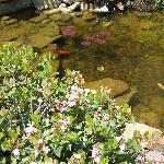 Their koi pond (near outdoor seating)