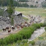 Horses leaving the ranch for evening pasture.