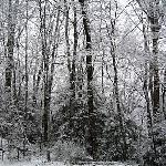 Snow covered trees near by.