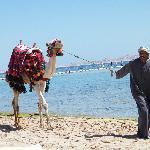 Micky the Camel