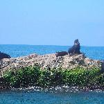 Bula tour to the Sea Lion Rock.