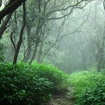 Misty overgrown jungle trail