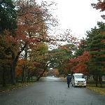 皇居内の紅葉