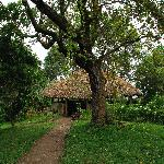 View from Nkuringo Gorilla Campsite