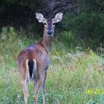 Deer at Inks Lake