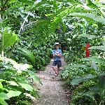 Walking down a path in the garden