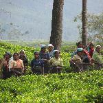 tea pickers on our walk