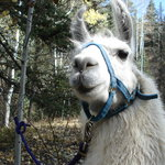 Wild Earth Llama Adventures