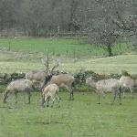 some of the nearby stags to be seen