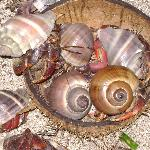 Even the hermit crabs exist on natural resources