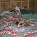 Husband and dog- sleeping comfortably!