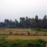vu sur la rizière avec un stupa