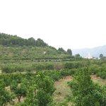 Tranquil Villages set among olive groves