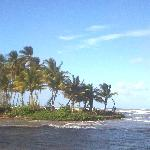 Island of Coconut trees-Driving along road leaving manzanilla