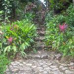 Gorgeous Lush Gardens