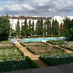 Large vegie garden & large pool