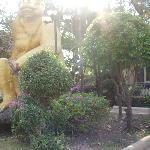 Giant monkeys in the Hotel garden