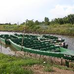 Pirogue boats used for Caroni Swamp tours
