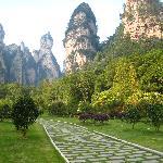 Fantastic scenery from down below in Zhangjiajie Forest Park