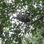 sloth outside the garden