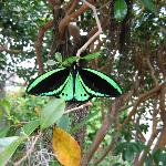 Large green butterfly