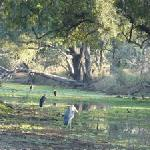 Glade with Heron