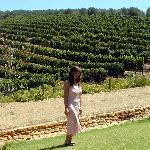 Unwinding @ the wineries of Constantia