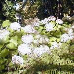 Romantic garden at the B&B