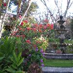 a view of the garden....
